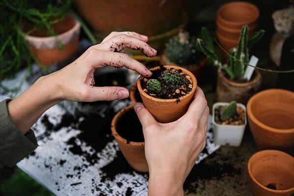 como proteger las plantas del frío