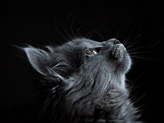 Cómo evitar que el gato se suba a la encimera