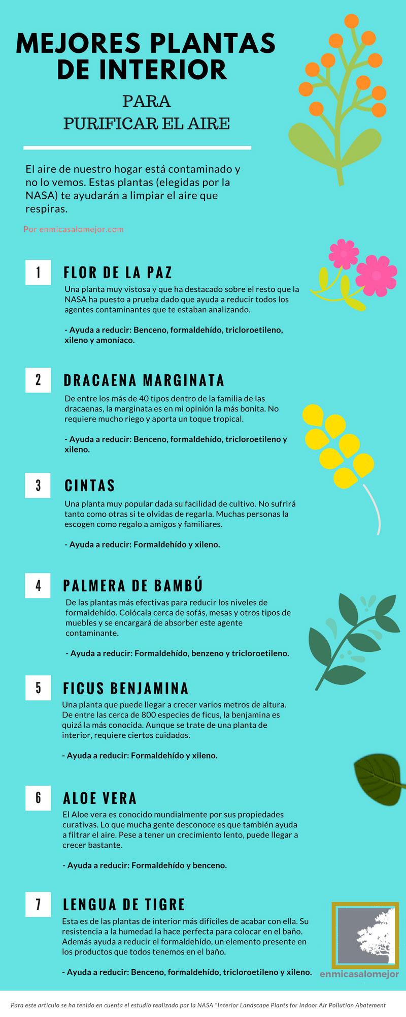 Las mejores plantas de interior para purificar el aire
