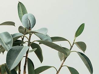 las mejores plantas de interior para purificar el aire cover